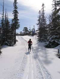Free-heel Nordic Ski Cross-country